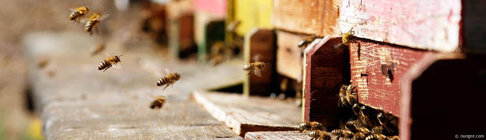Biene Langschlag